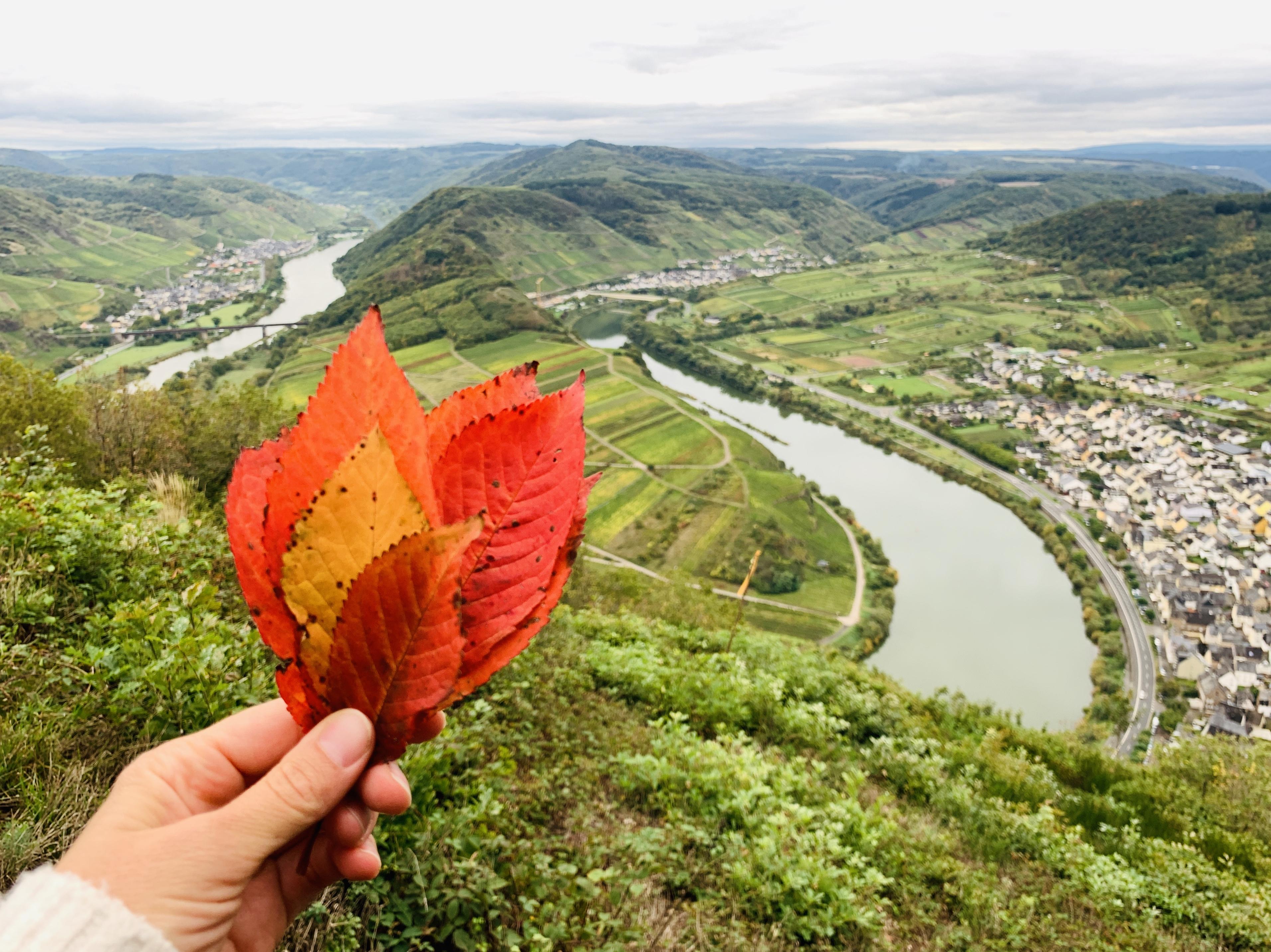Herbststimmung an der Moselschleife bei Bremm