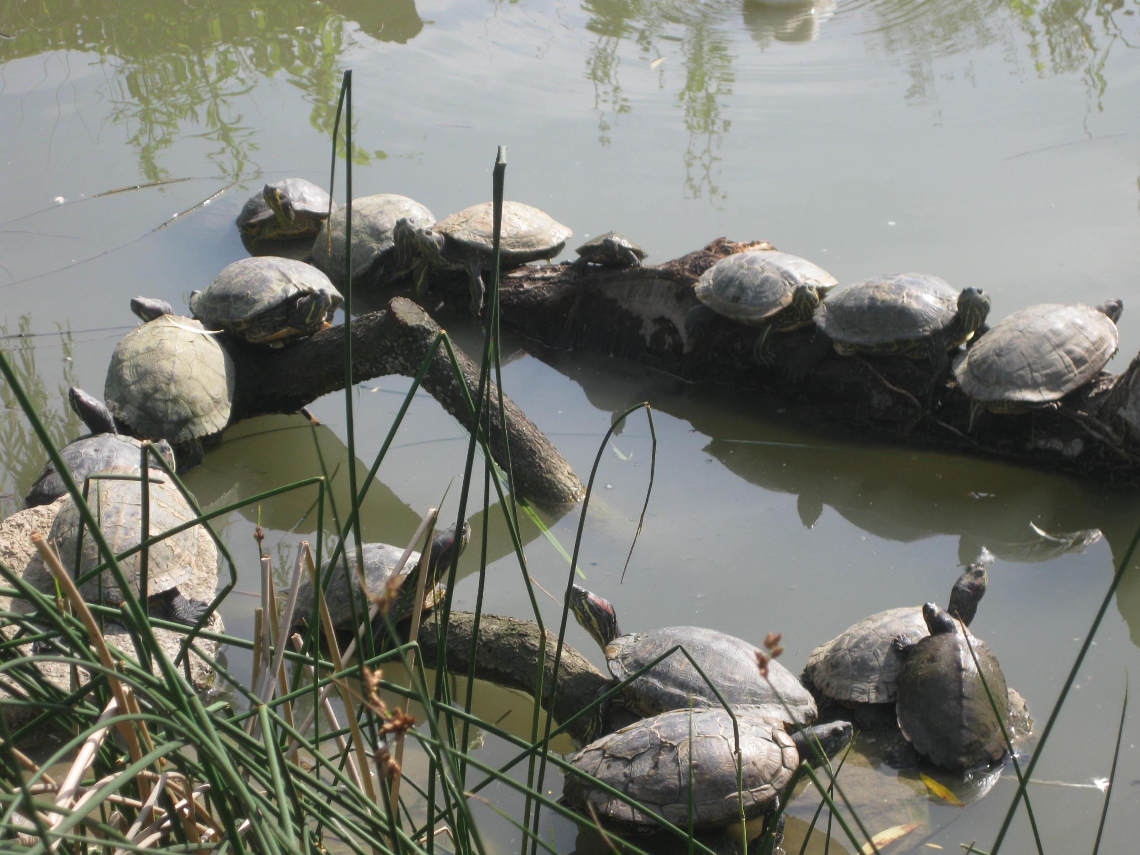 Schildkröten im NaturOparc