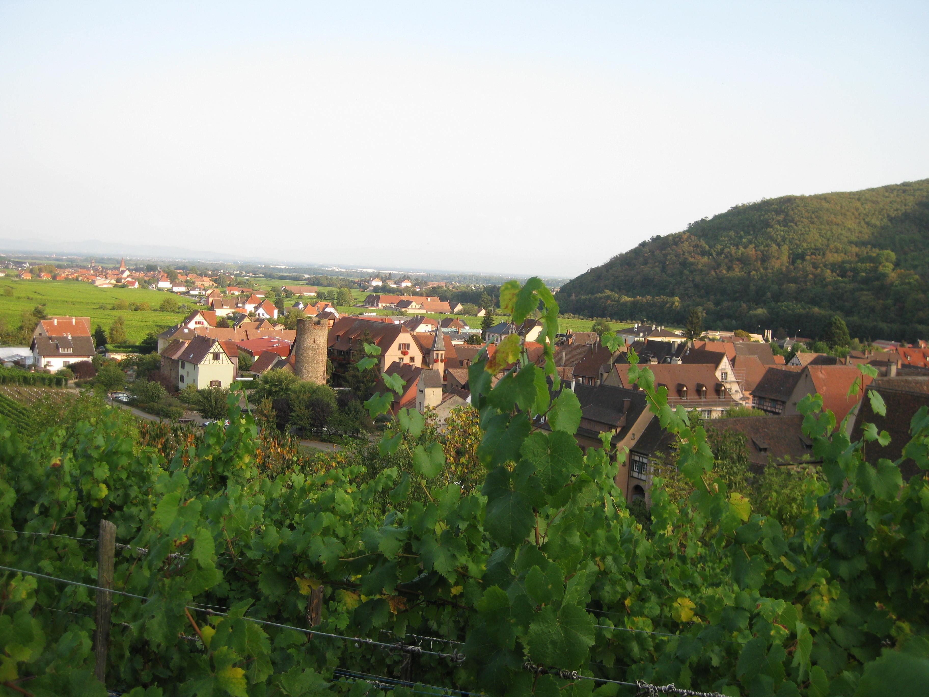 Kaysersberg aus den Weinbergen