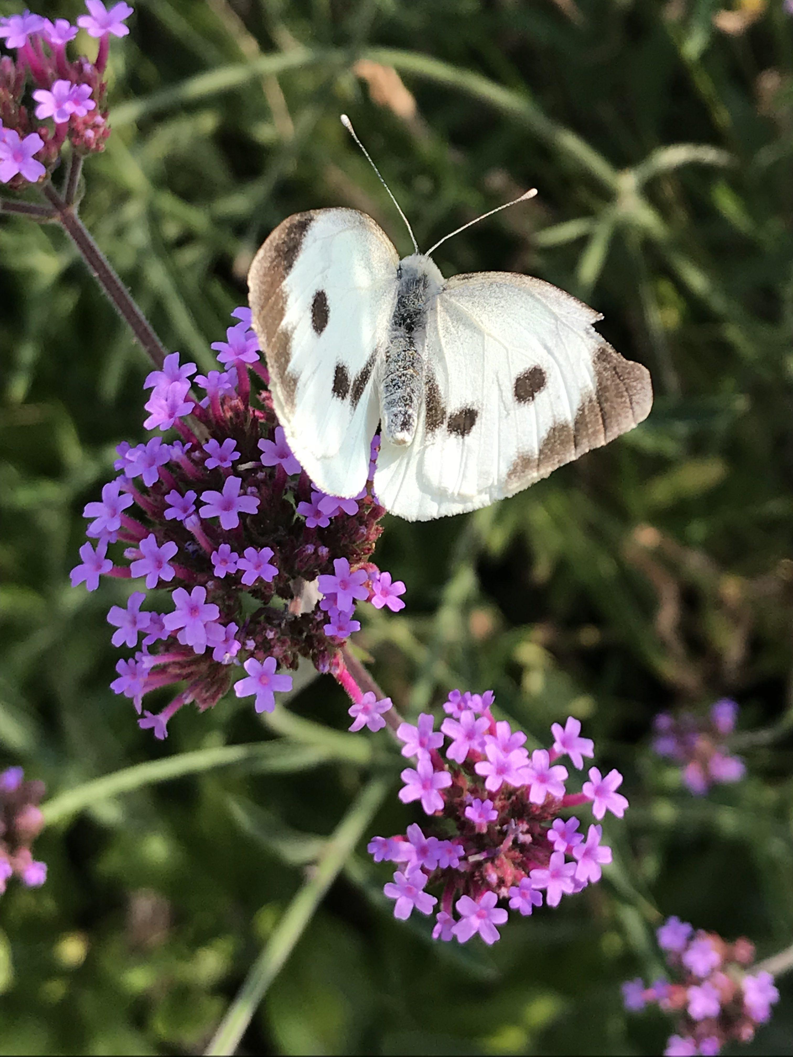 Garten Blume & Schmetterling