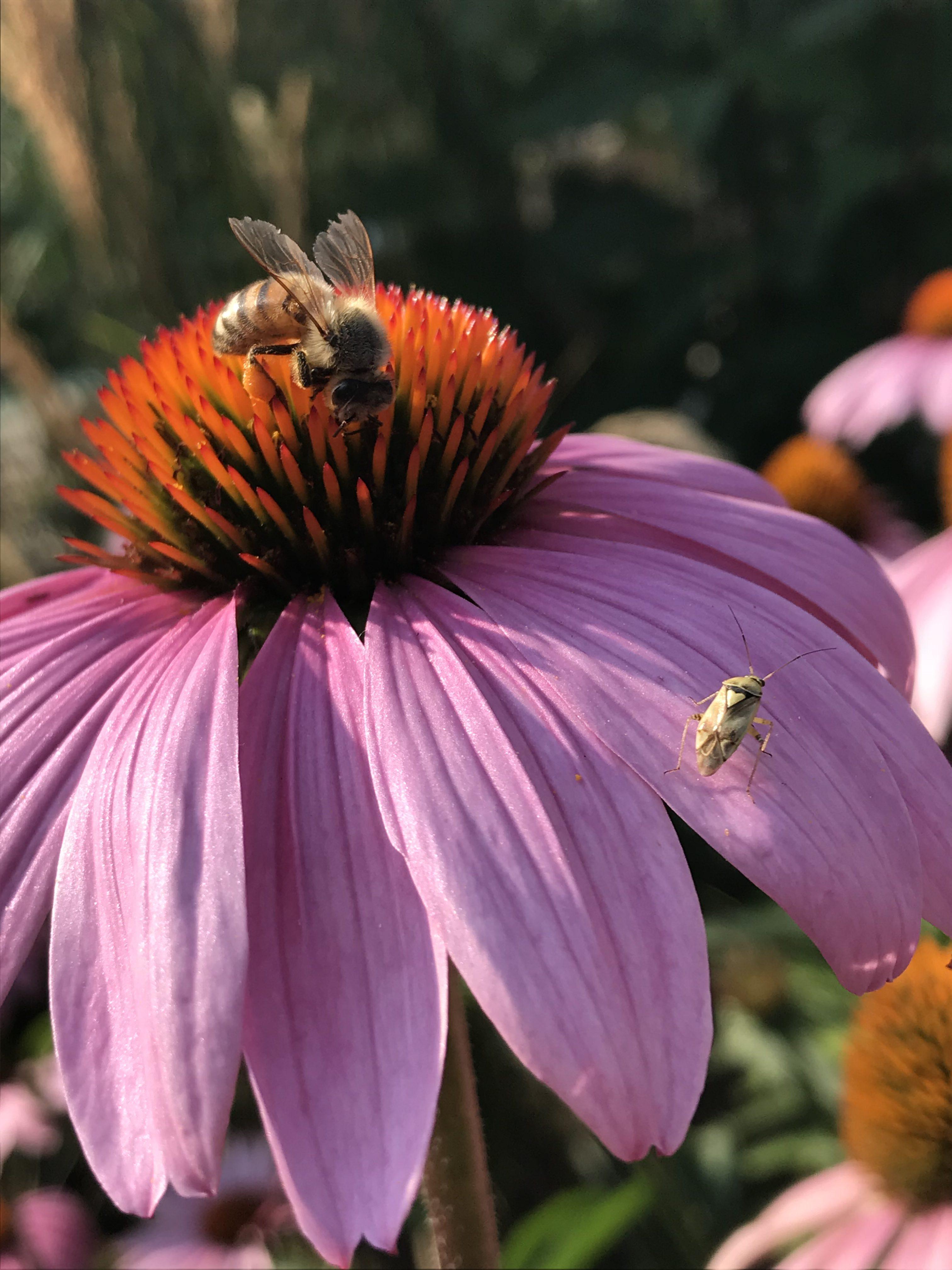 Garten Blume & Biene