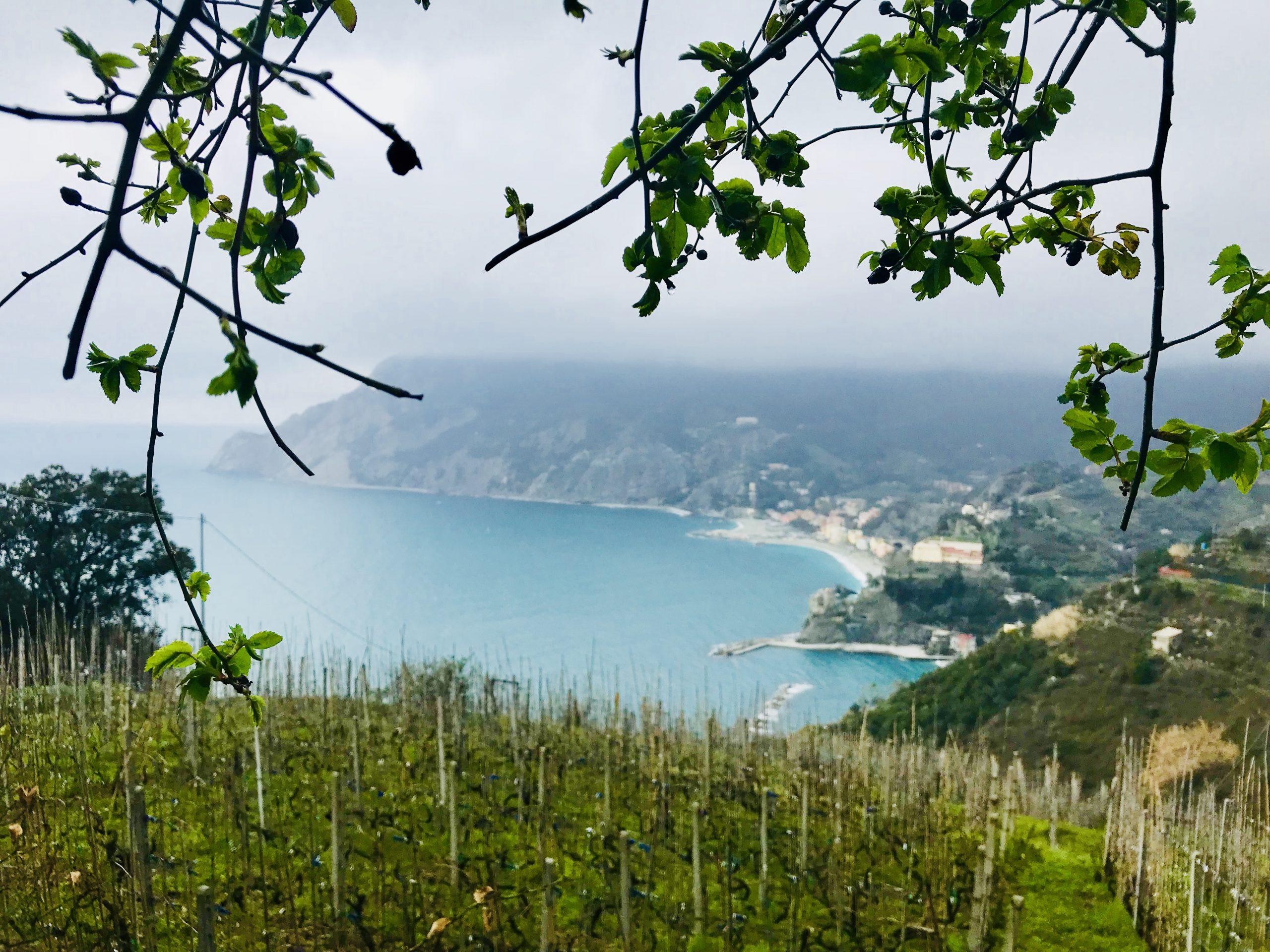Blick auf Monterosso al Mare