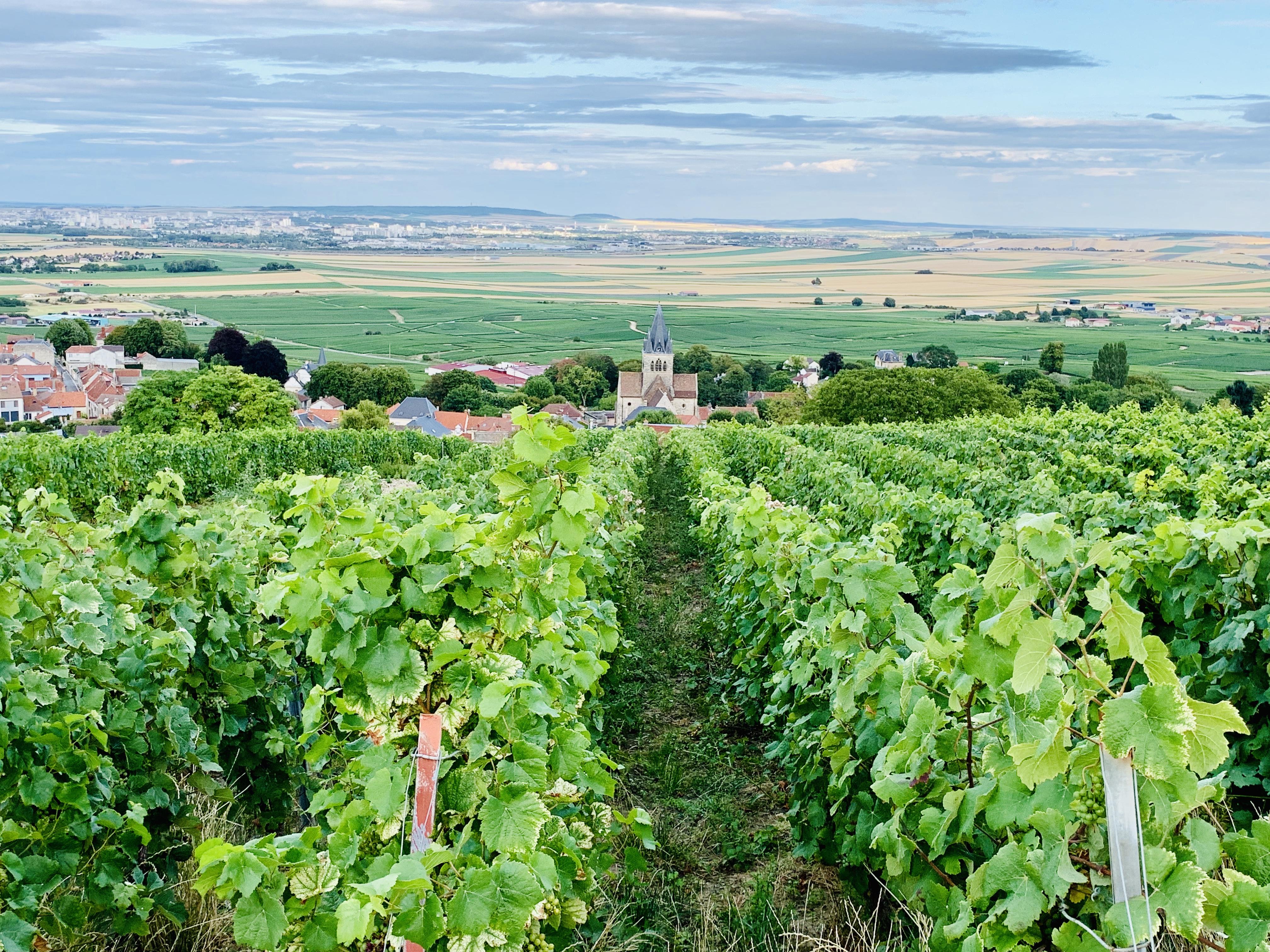 Europa Roadtrip 2019 - Weinberge, Champagne
