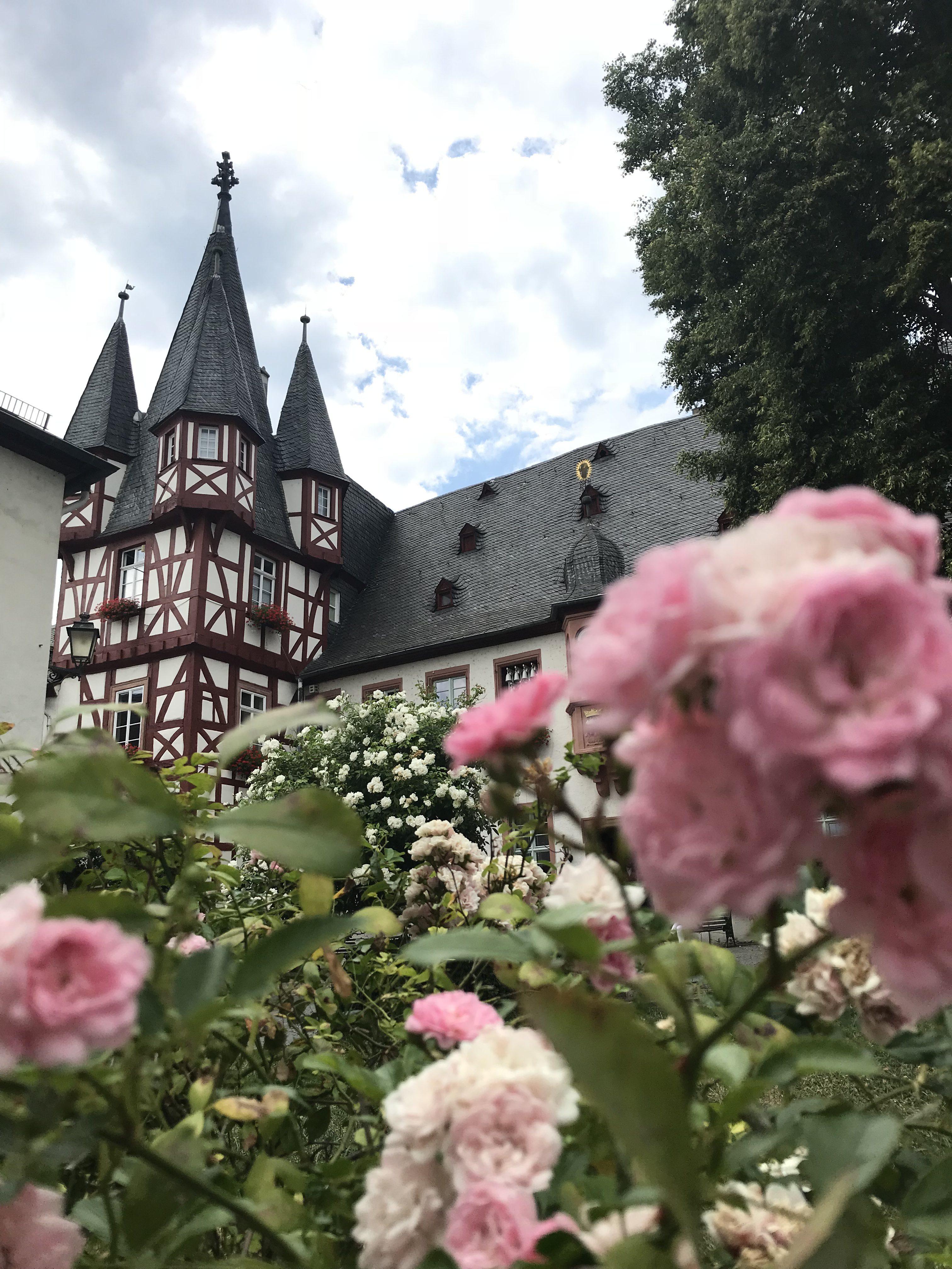 Eltville Rosen und historisches Gebäude