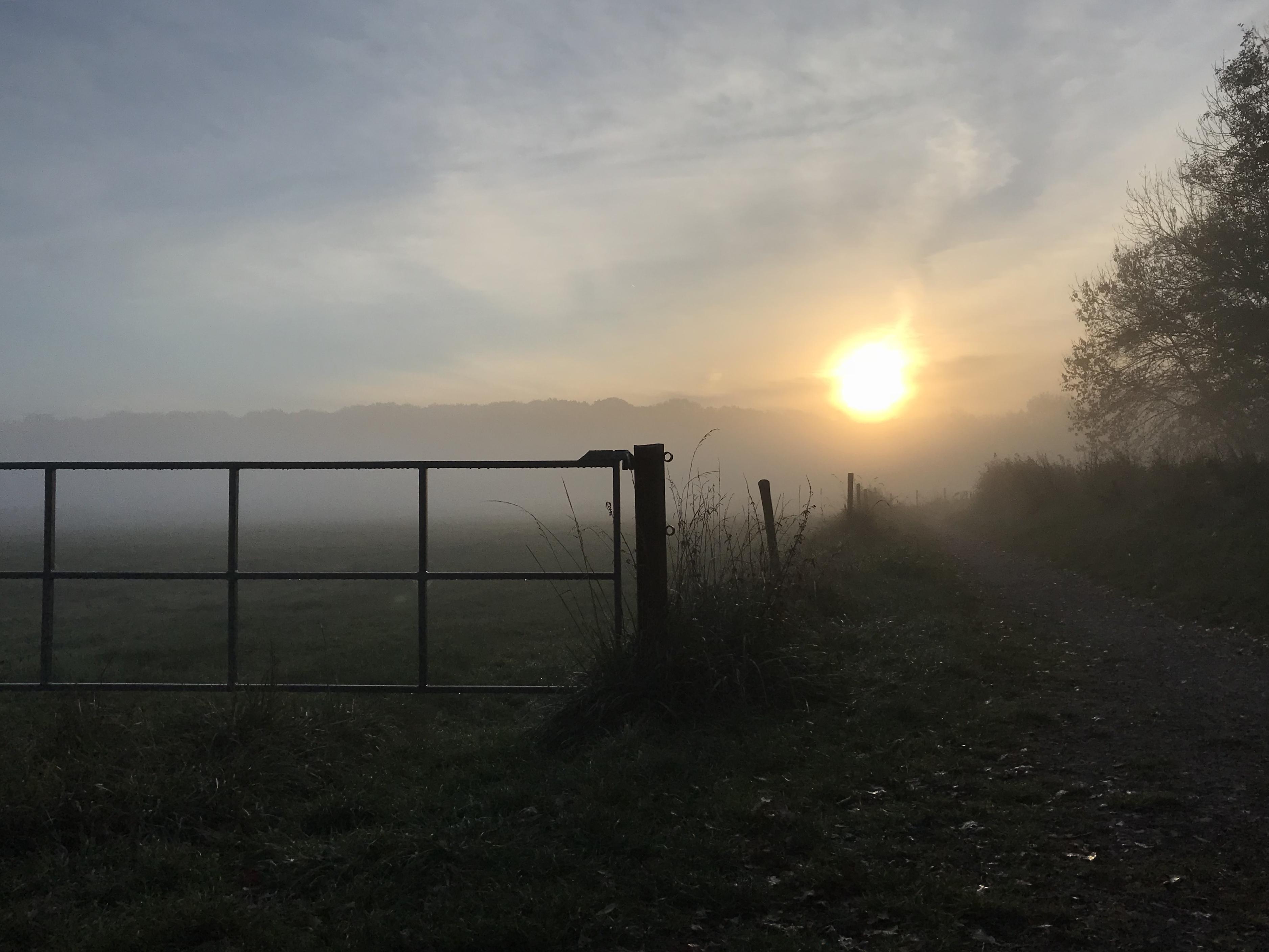 Sonnenaufgang beim Rundweg um den Borner See im Naturpark Schwalm-Nette