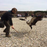 Adlerwarte Kintzheim – La Volerie des Aigles