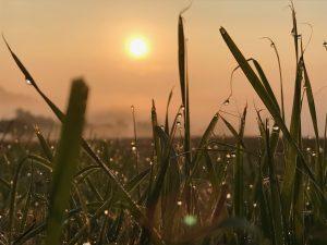 Sonnenaufgang Eifel Deutschland
