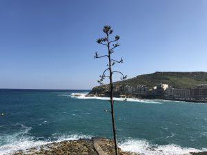 Küste von Marsalforn