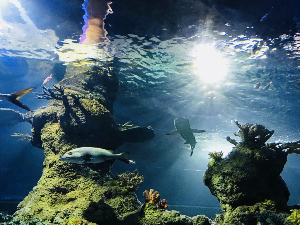 das große Fischbecken in Maltas Aquarium