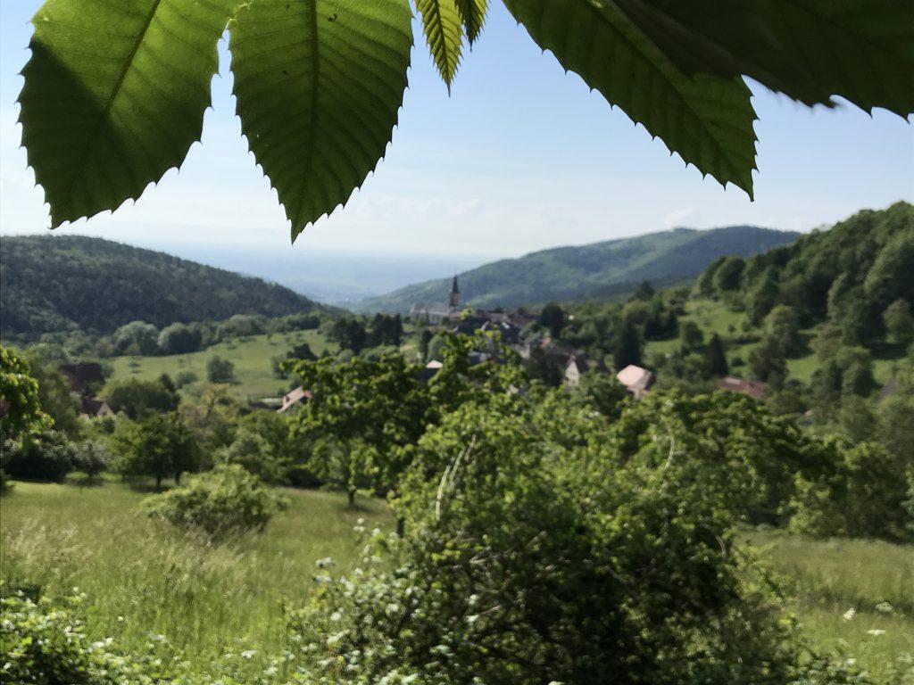 Ausblick vom Wanderweg in Thannenkirch Elsass