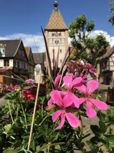 Bergheim, Elsass