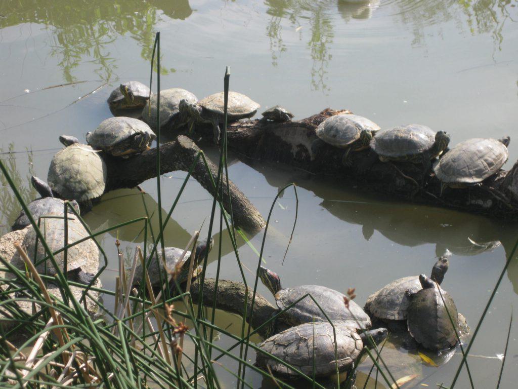 NaturOparc Schildkröten