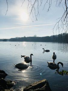 Der Hariksee kann durchaus als Schwanensee bezeichnet werden