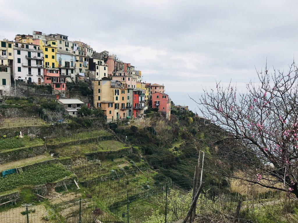 Das bunte Dörfchen Corniglia in der Region Cinque Terre