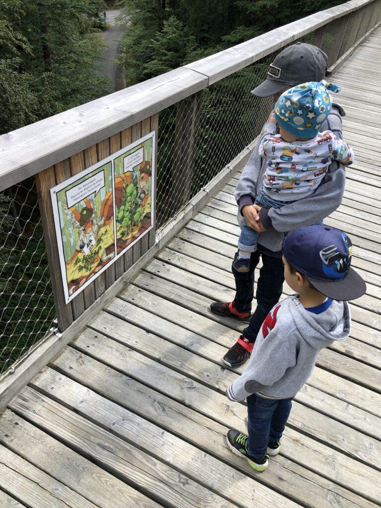 Baumwipfelpfad im Nationalparkzentrum Lusen