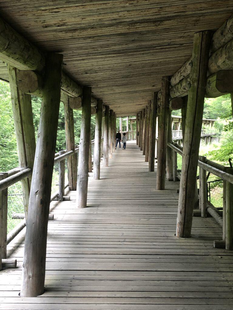 Rundweg des Tierparks Nationalparkzentrum Falkenstein