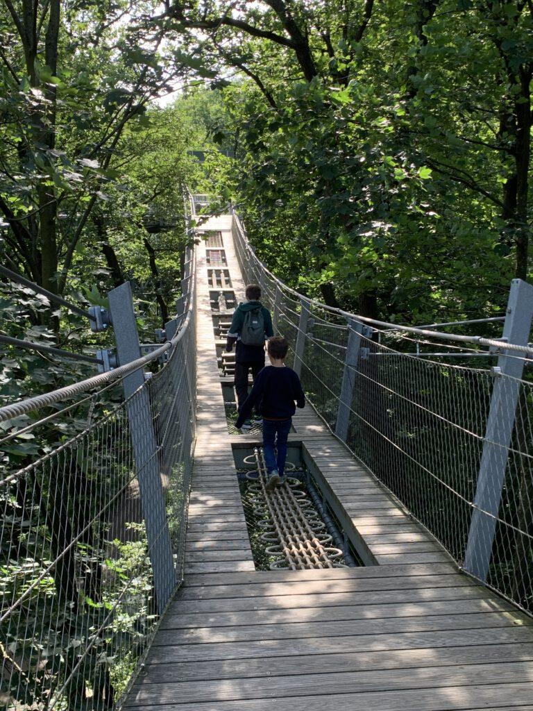 Urlaub mit Kindern im Harz - Ausflug zum Baumwipfelpfad