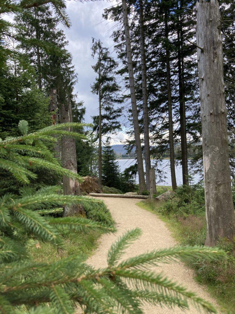 Oderteich Talsperre - Ausflugsziel im Harz