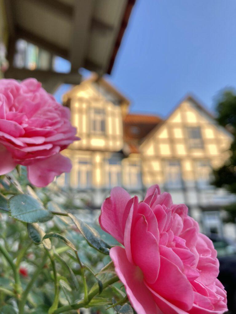 Impressionen der Altstadt in Wernigerode - Harz Urlaub